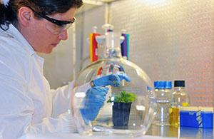 Prof. Levine's lab