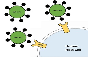 SARS-CoV-2 spike protein and ACE-2