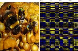 דבורים