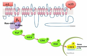 New mechanism for the action of voltage-dependent Ca channels