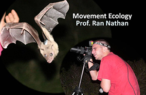 Movement ecology - working with bats