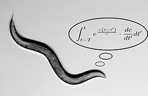 The mathematical skills of worms